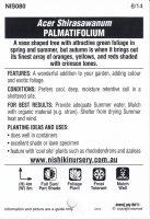 Acer-shirasawanum-palmatifolium-2