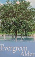 Alnus-jorullensis-Evergreen-Alder-1