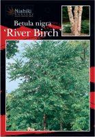 Betula-Nigra