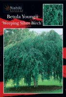 Betula-pendula-Youngii