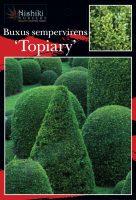 Buxus-semp-English-Box-Topiary-Ball-1