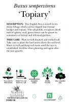 Buxus-semp-English-Box-Topiary-Ball-2