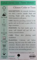 Cedrela-sinensis-Chinese-Toon-2