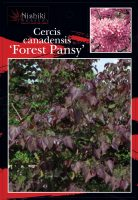Cercis-canadensis-Forest-Pansy-1