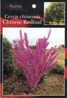 Cercis-chinensis-1