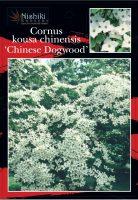 Cornus-kousa-Chinese-Dogwood-1