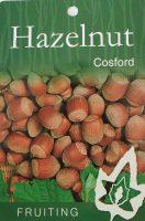 Corylus-avellana-Cosford-Hazelnut-1