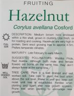 Corylus-avellana-Cosford-Hazelnut-2