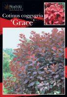 Cotinus-coggygria-Grace-1