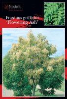 Fraxinus-griffithii-Evergreen-Ash-1