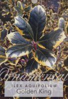 Ilex-aquafolia-Golden-King-Holly-1