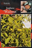 juglans-walnut-1