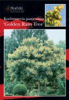 Koelreuteria-paniculata-Golden-rain-Tree-1