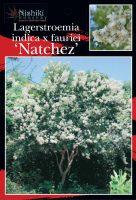 Lagerstroemia-Natchez-Tree-Form-1