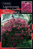 Lagerstroemia-Tuscarora-1