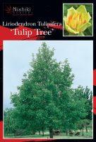 Liriodendron-tulipifera-Tulip-Tree-1