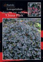 Loropetalum-chinense-rubrum-Burgundy-1
