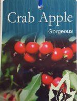 malus-atrosanguinea-gorgeous-crabapple-1