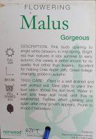 malus-atrosanguinea-gorgeous-crabapple-2