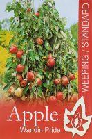 Malus-domestica-Wandin-Pride-Weeping-Apple-1
