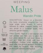 Malus-domestica-Wandin-Pride-Weeping-Apple-2