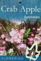 Malus-spectabilis-Crab-Apple-1