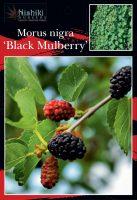 Morus-nigra-Black-Mulberry-1