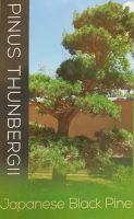 Pinus-thunbergii-japanese-Black-Pine-1