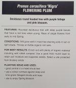 Prunus-cerasifera-nigra-Purple-Leaf-Flowering-Plum-2