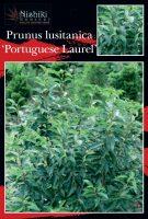 Prunus-lusitanica-Portugese-Laurel-1