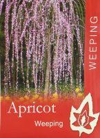 Prunus-mume-pendula-Weeping-Apricot-1