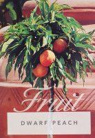 Prunus-persica-Dwarf-Fruiting-Peach-1