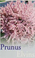 Prunus-Elvins-1