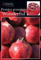 Punica-granatum-Wonderful-Pomegranate-1