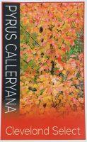 Pyrus-calleryana-Cleveland-Select-1