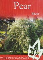Pyrus-salicifolia-Weeping-Silver-Pear-1