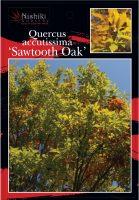 quercus-accutisima-sawtooth-oak-2