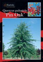 quercus-palustris-pin-oak-1