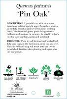 quercus-palustris-pin-oak-2