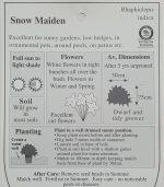 Rhaphiolepsis-indica-Snow-Maiden-2