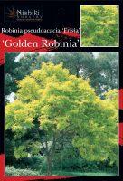 Robinia-pseudoacacia-Frisia-1