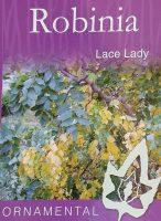 Robinia-pseudoacacia-Lace-Lady-1