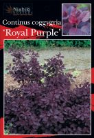 Cotinus-coggygria-Royal-Purple-1