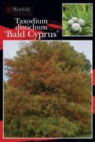 Taxodium-distichum-Bald-cypress-1