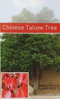 Triadica-sebifera-Chinese-Tallow-1