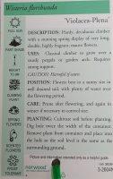 wisteria-floribunda-violacea-plena-2